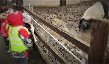 farm-with-pig